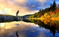 HD wallpapers fly fishing, trout, trout fish splash, fishing, calm ...