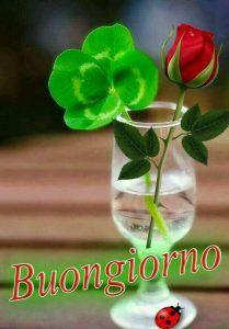 Immagini romantiche di Invia o Condividi via Whatsapp | Titolo 3903