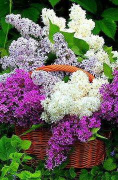 Shades of the Lilac Lilac Flowers, Exotic Flowers, Pretty Flowers, Colorful Flowers, Beautiful Flower Arrangements, Floral Arrangements, Spring Garden, Beautiful Roses, Garden Inspiration