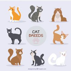 Hand drawn cat breed collection Free Vector