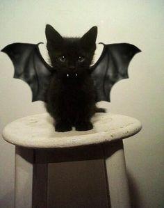 Bat Costume Cat
