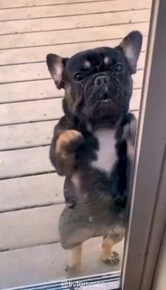 This beautiful puppy dances better than me. 🐶 Este hermoso perrito baila mejor que yo. Super Cute Puppies, Baby Animals Super Cute, Cute Baby Dogs, Cute Funny Dogs, Cute Little Puppies, Cute Dogs And Puppies, Cute Little Animals, Cute Funny Animals, Doggies