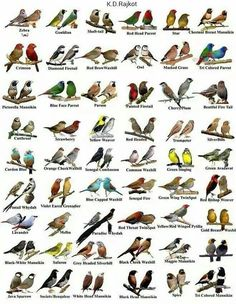 All Birds, Little Birds, African Lovebirds, Weird Insects, Bird Pictures, Wall Pictures, Vintage Bird Illustration, Bird Identification, Bird Types