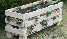 strawberry-pallet-planter4