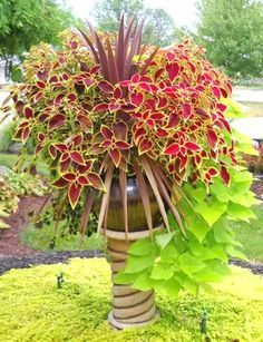 The plants to do this container arrangement? It's basically 4 coleus, a  sweet potato vine and a red spike. I have a plant sale coming up in April .