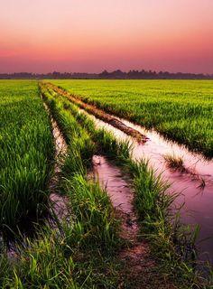 Kerala Rice Fields Sunset Photo credit to Romain Mattei
