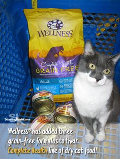 This is the Year of the Cat. To celebrate @wellnesspetfood has added 3 grain-free recipes to their Complete Health line. All are now available at PetSmart. #sponsored #HappyMeetsHealthy #HealthyMeetsHappy