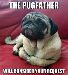 Pug Father - #bustahthepu #pug Father - #bustahthepug