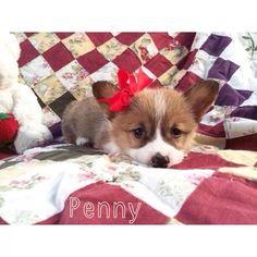 Hellooo Penny!!!