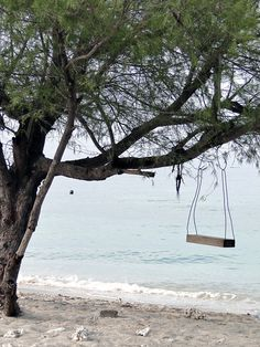A swing in a beach front tree Coastal Homes, Coastal Living, Coastal Decor, Picture Places, Beach Aesthetic, Need A Vacation, Peaceful Places, Sea And Ocean, Garden Spaces