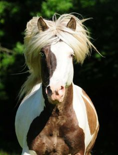 Don't hate me because I'm beautiful...maybe it's NEIGH-belline