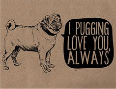 Pug Valentine Card by Rebecca Nguyen