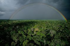Yann Arthus-Bertrand is a French photographer who specializes in aerial photography. Here are some of his coolest shots from around the world. Aerial Photography, Nature Photography, Arthus Bertrand, Forest Ecosystem, Amazon Rainforest, Nature Wallpaper, Science And Nature, Nature Photos, Oeuvre D'art