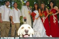Hello there!! A wedding is an exceptionally special day. Sometimes, an opportune photo flub makes the occasion eve