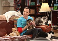 A group of cats is called a clowder, or a glaring, you should know that, now that we have one... I love Sheldon