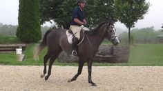 Equestrian says Michael Phelps' horse could be in the Olympics one day  -  August 10, 2016