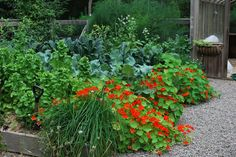 http://unquadratodigiardino.it/forum-di-giardinaggio/verdure-piante-da-orto-piccoli-frutti-arbusti-da-frutta-e-alberi-da-frutto/22796-ortogiardino-giardorto-ortaggi-ornamentali-fiori-nell-orto-biete-colorate-cavoli-colorati.html