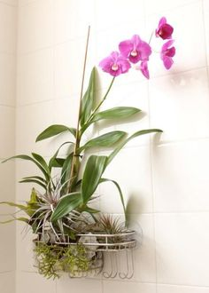 A bath sponge, orchid and wire shower caddy can turn a bathroom into a tropical spa.