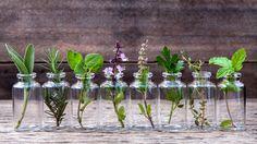 Proti nachlazení a bolesti v krku si můžeme vzít na pomoc i léčivé rostliny. Ukážeme Vám 3 nejúčinnější léčivé rostliny, ke kterým se můžete velmi snadno dostat.