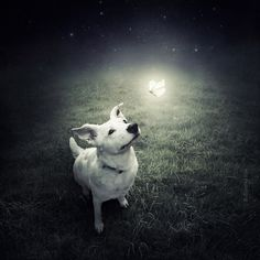 Helping Shelter Dogs: Surreal Dog Photography by Sarolta Ban - Dog Milk