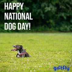 Happy National Dog Day! Celebrate those little pups and appreciate all the dogs around you.   Fetch your dog a gift, it's #nationaldogday! #giftfly #daysoftheyear