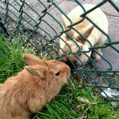 Bunny Love has no bounderies!