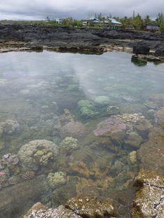 Kapoho Tidepools Big Island Hawaii