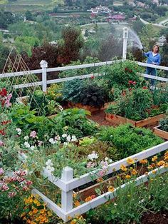 Great little compact vegetable garden with raised beds! Charming! #vegetablegarden