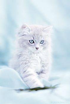 Magnificent > Beautiful Cats Images :D