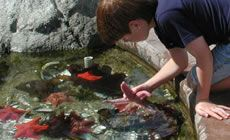 Tour the Bodega Marine Lab and learn about local marine life.