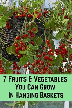 7 Fruits & Vegetables You Can Grow In Hanging Baskets - - Planting fruits and veggies in hanging pots is a great way to maximize space, add more visual interest to your garden and save money on your grocery bill. Plants For Hanging Baskets, Hanging Flowers, Hanging Pots, Hanging Gardens, Hanging Vegetable Basket, Hanging Basket Garden, Hanging Plants Outdoor, Fruit Plants, Edible Plants