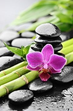 zen basalt stones and orchid with dew