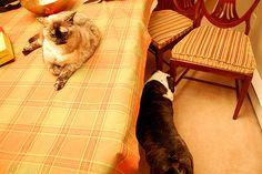 Cat/Dog Detente -- Sort Of