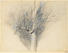 Cave to Canvas, John Ruskin, Budding Sycamore, c. 1876