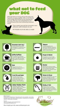 What not to feed your dog. #toxic #poison #dog www.tailblazerspets.com