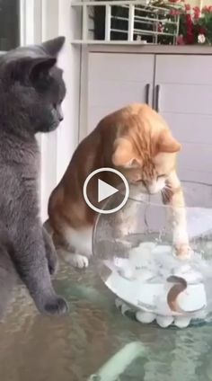 funny cats and dogs compilation. funny animals compilation try not to laugh. funny animals 2019 try not to laugh. Funny Cats And Dogs, Cute Cats And Kittens, Baby Cats, Cute Cat Gif, Cute Funny Animals, Funny Cat Memes, Funny Animal Videos, Funny Humor, Funny Videos