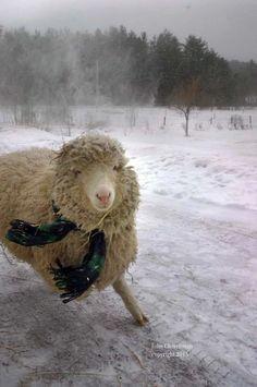 Home - Sweet Pea & Friends Nature Animals, Zoo Animals, Cute Animals, Animal Pictures, Funny Pictures, Baa Baa Black Sheep, Free Bible Study, Cute Sheep, Nature Republic