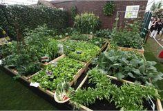 horta em caixas