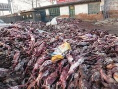 """Those fur trimmed ugg boots, that coat, fluffy toy etc, look at the reality of what wearing any kind of fur means for animals, including these raccoon dogs in China that have lived in tiny cages, full of excrement, in the snow, in the sun and the rain then bashed senseless and skinned alive because it's easier while their blood flows. Think about your choices."""