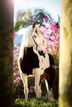 Horse, flowers. Photo by Raphael Macek of Brazil. Please also visit www.JustForYouPro... for colorful-inspirational-Prophetic-Art and stories. Thank you so much, blessings!