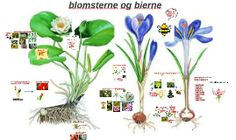 Copy of blomsterne og bierne