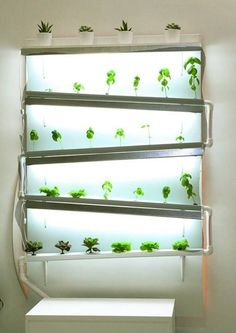 A fully functional indoor #hydroponic wall growing herbs and lettuce - source-  Sassakala