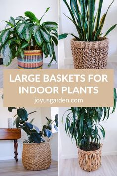 Are you looking for ways to display your houseplants? Check out these stylish large baskets for your floor plants. Your indoor plants will stand out beautifully with your home decor in these baskets! #plantbasketsindoor #plantbaskets