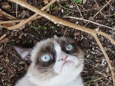 #GrumpyCat #Photo