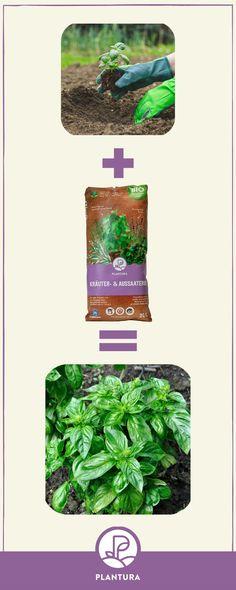 Unsere Plantura Bio-Kräuter- Cluster, Kraut, Ph, Sage, Lavender, Square Foot Gardening, Ornamental Plants, Harvest