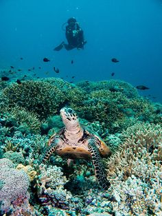 bottom ocean life 1600x1200 deluxe