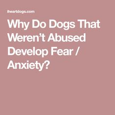 Why Do Dogs That Weren't Abused Develop Fear / Anxiety?