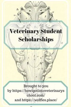 """A Veterinary Student Scholarship is offered by the """"How I Got Into Veterinary School"""" site and Wolfie's Place. Simple application and essay. Scholarships For College Freshmen, School Scholarship, Financial Aid For College, College Tips, College Ready, Graduate School, Student Loans, Veterinary Colleges, Veterinary Technician"""
