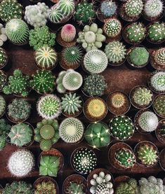 Different Kinds of Cacti, Cactus Lover, Cactus Plants, One of a kind beautiful Cactus Plants Diy Garden, Garden Plants, Indoor Plants, House Plants, Indoor Herbs, Indoor Gardening, Air Plants, Cacti And Succulents, Planting Succulents