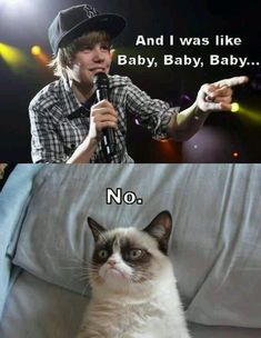 Why Is the Grumpy Cat Always Angry? - Grumpy Cat - Ideas of Grumpy Cat - Why Is the Grumpy Cat Always Angry? The post Why Is the Grumpy Cat Always Angry? appeared first on Cat Gig. Grumpy Cat Quotes, Funny Grumpy Cat Memes, Funny Animal Memes, Funny Cat Videos, Funny Animals, Funny Memes, Grumpy Cats, Cat Jokes, Cats Humor